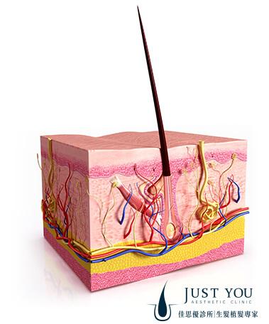 健康的头皮才能提供头发良好的生长环境